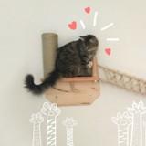 Le pont à chat : le cadeau dont votre matou rêve jour et nuit !