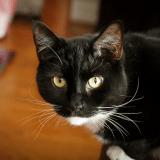 5 idées shopping pour la rentrée de votre chat !