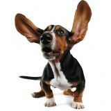 Le top 7 des chiens les plus fous !