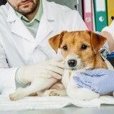 Auxiliaire vétérinaire : tout ce qu'il faut savoir sur ce métier