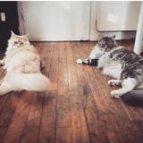 L'Atelier Félin : un lieu de conseils pour les futurs adoptants et les propriétaires de chats