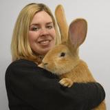 Atlas, le lapin géant abandonné à cause de sa taille a enfin trouvé une nouvelle famille