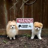 « Attention au chien » : 15 photos de pancartes légèrement mensongères