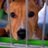« Au cœur des refuges », la websérie qui donne une autre vision de la protection animale, lance sa 3ème saison !