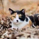 25 photos de chats qui adorent l'automne