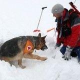 Les chiens d'avalanche, ces sauveteurs pas comme les autres