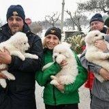 Séisme en Italie : trois chiots ensevelis sous la neige, miraculeusement sauvés deux jours après l'avalanche