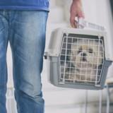 Comment partir à l'étranger avec son animal ?