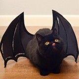 Petite star du Web, ce chat noir maîtrise l'art du déguisement à la perfection