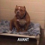 Les photos de ces chiens avant et après leur adoption vont vous mettre du baume au cœur