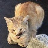Avant/Après : la transformation de ce chat errant blessé par une voiture après son adoption est incroyable !