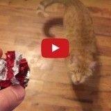 Aveugle, ce chat rapporte la balle aussi bien qu'un chien ! (Vidéo du jour)