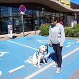 Un chien guide d'aveugle a été refoulé d'un magasin de Limoges (Vidéo)
