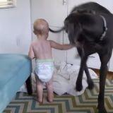 Quand un bébé très effronté domine un chien bien conciliant (Vidéo du jour)