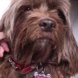 Un chien disparu depuis 2 ans retrouvé et sauvé par un pêcheur