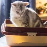 Quel est le meilleur bac à litière pour chat en 2021 ?