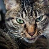 Les 7 signes qui prouvent que votre chat vous veut du mal