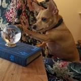Elle achète une boule de cristal, mais ne se doutait pas un seul instant de ce qu'en ferait son chien !