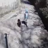 Un homme est filmé en train de promener son chien : la fin de la vidéo est déchirante