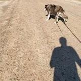 En balade, son chien découvre un écriteau et fait quelque chose qui émeut 365 000 personnes (vidéo)