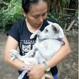 Bali : ils sauvent des animaux en urgence avant l'éruption imminente du volcan