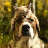 Ce chien et ce chat adorent voyager ensemble, et leurs photos de vacances sont incroyables
