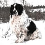 """Témoignage : une lectrice rend un touchant hommage à son chien, son """"alter ego"""""""