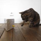 FroliCat Cheese de PetSafe : le chat Balzac a testé ce jouet pour nous !