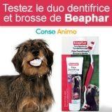 Testez gratuitement le duo brosse et dentifrice pour chien Beaphar !
