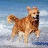 Une plage entièrement dédiée aux chiens ? C'est le pari fou qu'a lancé cette ville !