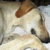 Abandonné dans une cabine téléphonique, ce chien ne pouvait même pas s'allonger
