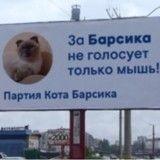 Après avoir voulu devenir maire, Barsik le chat vise la Présidentielle russe !