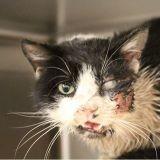 Un vrai miracle : enterré vivant pendant 5 jours ce chat a survécu