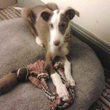 Basile, un petit chien abandonné, sauvé, puis euthanasié par les autorités