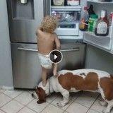 Affamé, cet enfant escalade son chien pour ouvrir le réfrigérateur, mais…