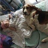 Ces chiens ont refusé de quitter le chevet de leur petite humaine mourante