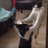 L'improbable bagarre d'un chat contre son reflet… filmée en slow motion ! (Vidéo du jour)