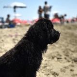 La plage BauBeach, un véritable paradis pour chiens en Italie
