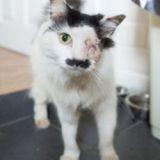 Un chat attaqué et laissé pour mort à cause de sa ressemblance avec Hitler ?