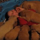 Un enfant prend un bain de chiots… (Vidéo du jour)