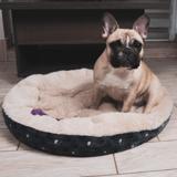 Les chiens auraient bien conscience de leur corps dans l'espace d'après une étude