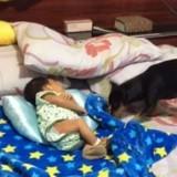 Le bébé dort à côté de son chien: quand le toutou prend la couverture, sa mère se met à pleurer