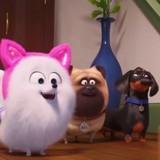 Comme des bêtes 2 apprend à votre chien à se comporter en chat ! (Vidéo)