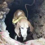 Côte d'Or : deux chiens se coincent dans une galerie à plus de 15 mètres de profondeur (vidéo)