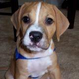 Un chiot Beagle répond à ses maîtres! (Vidéo du jour)