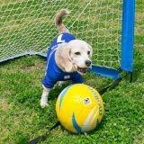 Deux records du monde pour une chienne adepte du ballon rond !