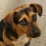 Pour partir en vacances tranquille, il abandonne son chien dans un refuge mais la suite est encore pire (Vidéo)