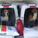 La SPA recueille douze chiens de laboratoire