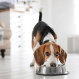 Quelle est la meilleure alimentation humide bio pour chien en 2021 ?