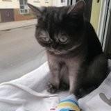 Personne ne veut de cette chatte à cause de son physique : un jour le téléphone sonne et le refuge croit à une erreur